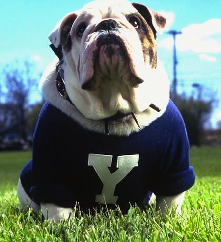 yale-bulldog-mascot-handsome-dan